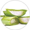 알로에베라잎